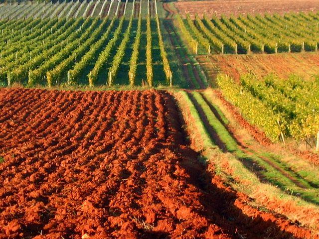 Splošno kmetijstvo